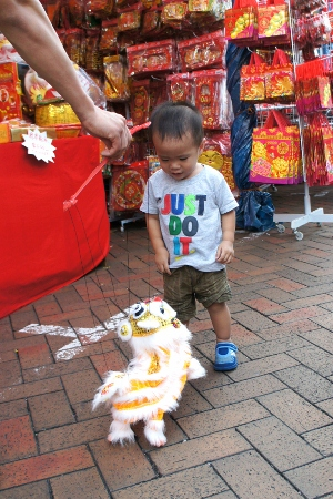 fascinated by little dancing lion