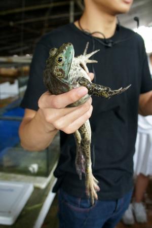 hello frog!