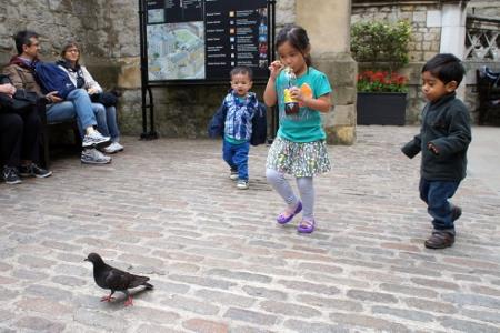 stalking pigeons