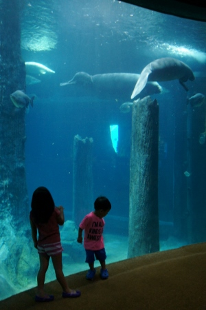 the kids liked the manatees too