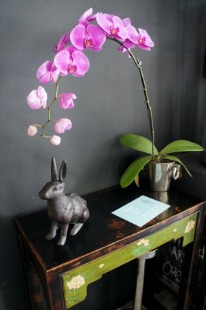 rabbit orchids pot