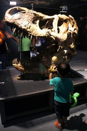very impressive T-Rex skull