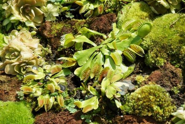 spot the Venus flytrap