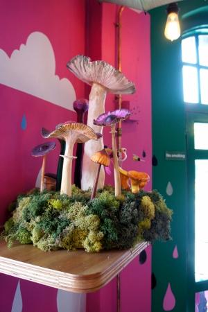 mushrooms everywhere