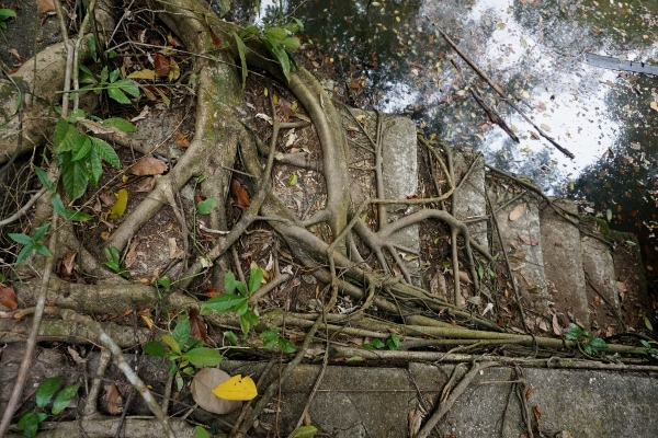 abandoned steps taken over by roots