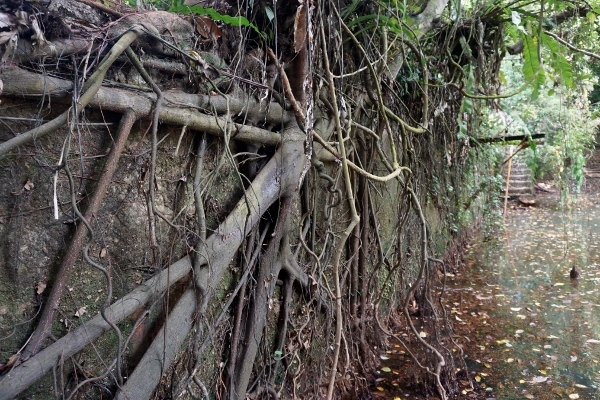 Angkor Wat?