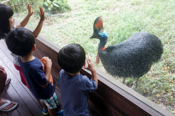 wary of the cassowary