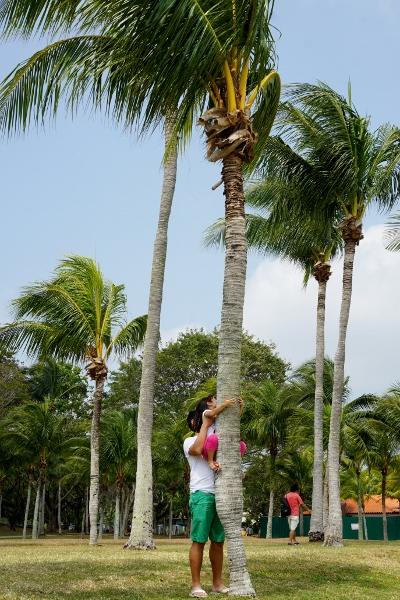 we need to climb a tree!