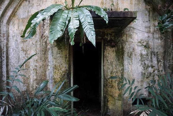 taken over by vegetation