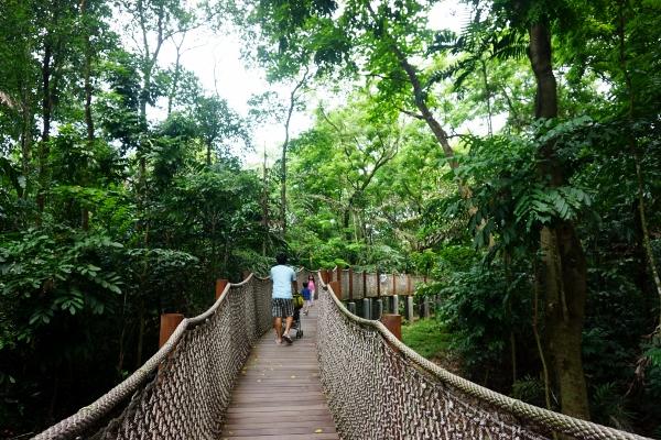mid-canopy walk