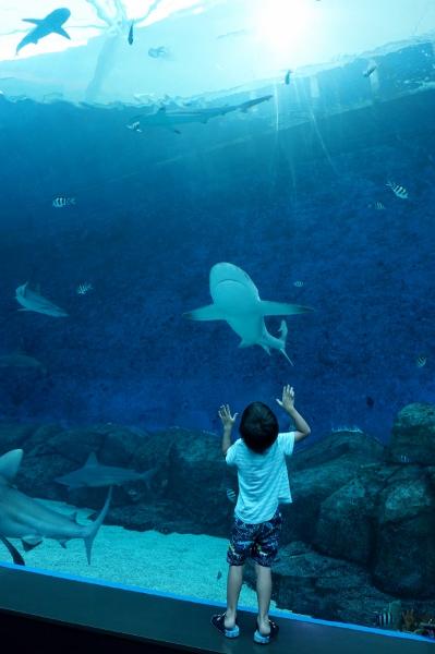 next stop: S.E.A. Aquarium
